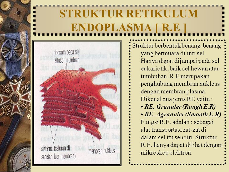 STRUKTUR RETIKULUM ENDOPLASMA [ R.E ]